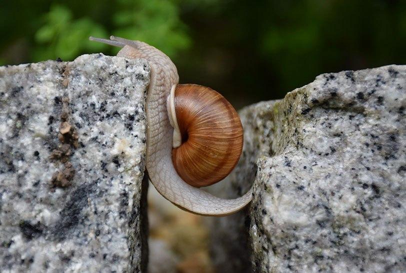 La incertidumbre continúa: es el momento de desarrollar la resiliencia (Portada)